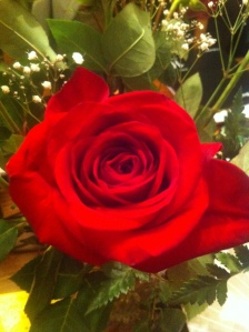 flowers rose 001